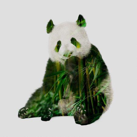Panda double exposition