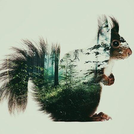 ecureuil photographie double exposition